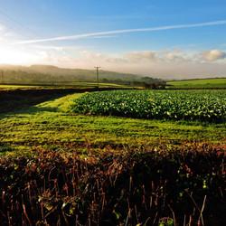 Idyllic Farmland