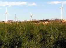 accompagnement de projet éolien