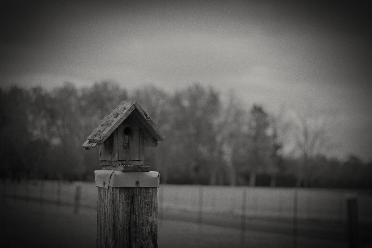 Birdhouse - Middleton, TN - 2014