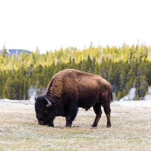 JW_Montana Trip-8714.jpg