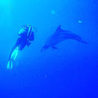 Dolphinw dive_2.jpg