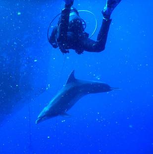 Dolphine dive.jpg