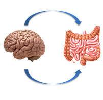 brain gut.jpg