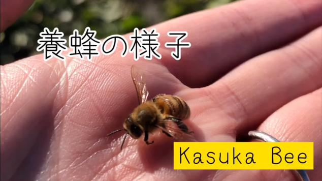 Kasuka・Bee カスカビー「蜜蜂のお世話」