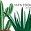 Thumbnail: House Plants Clipart, Indoor Plants Planner Elements, Hand Painting, Cactus