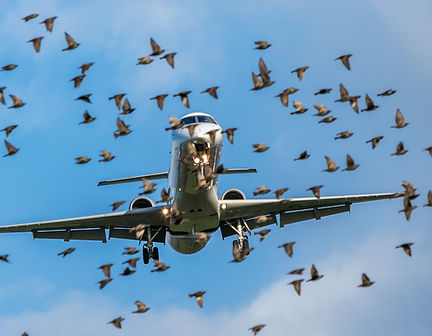 plane with birds stock.jpeg