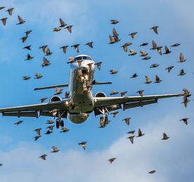 plane with birds stock.jpeg