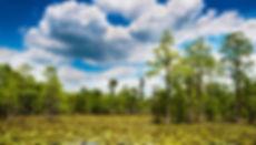 wetland stock.jpeg