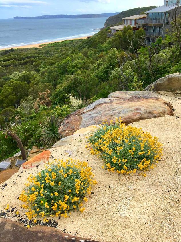 Bouddi Landscaping Killcare Heights