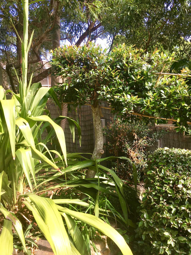 Bouddi Landscaping Killcare