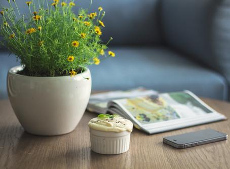 Why you should have plants? / Por que você deveria ter plantas?