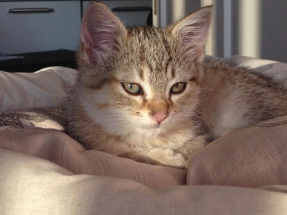 Petite chatte Durga