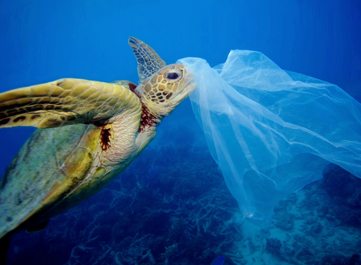 Opinion: Keep choking sea turtles with plastic because they too have sexual urges