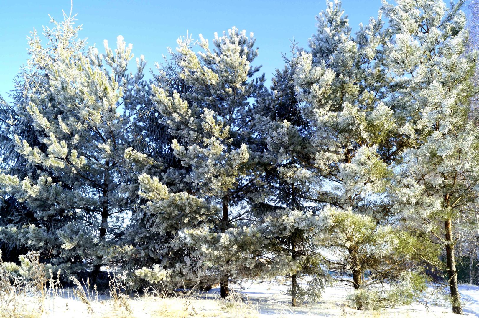Прекрасная природа в зимнее время года