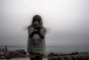 shadowflies copy.jpg