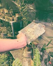 Say hello to my little friend(s x1500). 🐞🐞 #wewaterwednesday #ladybug #greenhouseaddition #plantlife #plants #greenhouse #ladybuggarden #plantbuddies #gardenfriends #ladybuggreenhouse #plantstagram