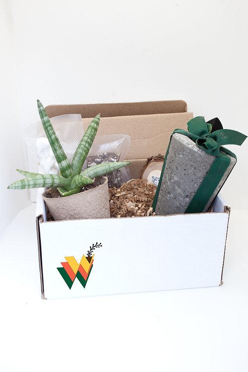 Succulent Plant Kit