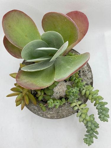 Low Light Succulent Arrangement