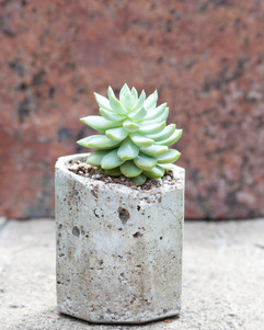 Everything succs without you.  #succulentsofinstagram #wewaterwednesday #plantlife #succulent #succulents #plant #plants #plantsmakepeoplehappy #succulentsofinstagram #succulentlove #dadjokes