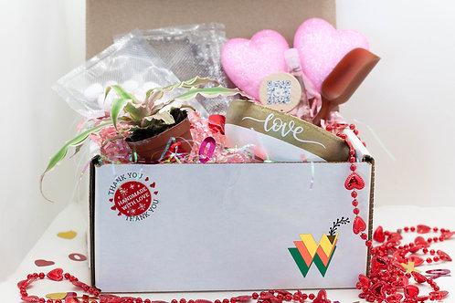 Valentine's Day Indoor Plant Kit