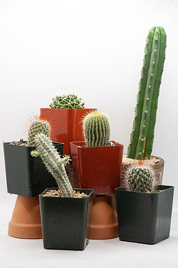 Cacti Collection Variety Sale.jpg