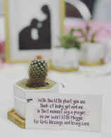 How cute did these favors turn out for @tiffany_page5's baby shower? Hope everyone loved their new plant they took home this past weekend!  #partyfavors #babyshower #plantfavors #babyshowerfavors #plantgifts #succulents #succulentfavors #wewaterwednesday
