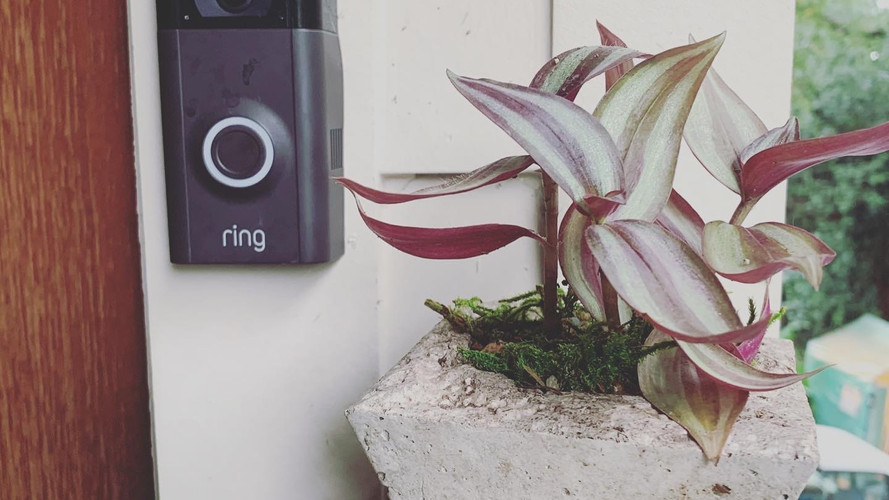 Knock knock...who's at the #ring   It's your next plant delivery from We Water Wednesday! #succulents #cementpots #plantdelivery #plantsofinstagram #plantlover #pots #easyplants #plantparenthood #plantphotography #plantlife #waterwednesday #wewaterwednesday #plants #ringcamera