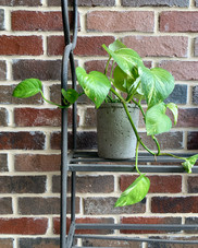 Pot it like it's hot.  #wewaterwednesday #pothos #pothosplant #pothography #devilsivy #devilsivyplant #plantsofinstagram #plantshelfie