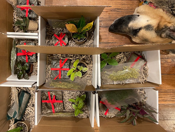 One of theses is not like the others.  #subscriptionbox #plantsofinstagram #christmasgifts #holidayshopping #plantsmakepeoplehappy #dogsofinstagram #dogswithplants #germanshepherd #germanshepherdswithplants