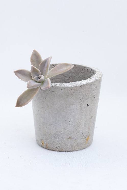 Simple Cement Pots