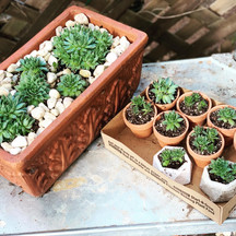 Meet our Hen and Chick Succulent Series! Limited availability, but if you order soon and ask for Hens, these brooding ladies can be yours! Ask how to get $10 off your order. Cheers! #succulents #wewaterwednesday #plantkit #succulentgifts #plantgifts #henandchicks #plantbox