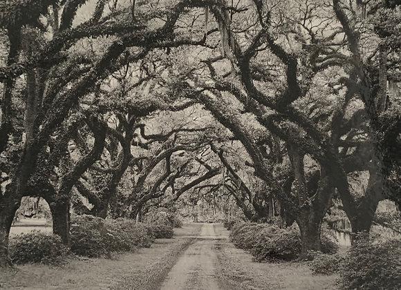 BLACK & WHITE TREE LINE BLANK CARD : Option 10