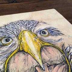 Eagle Face - Close up detail