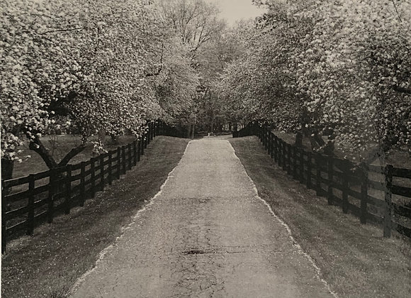 BLACK & WHITE TREE LINE BLANK CARD: Option 4