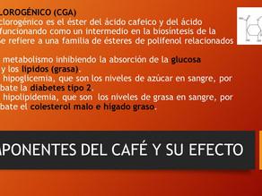 COMPONENTES DEL CAFÉ Y SU EFECTO 2 DE 3