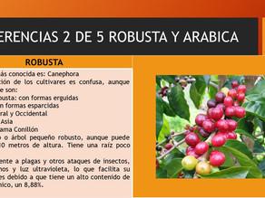 DIFERENCIAS ROBUSTA Y ARABICA 2 DE 5