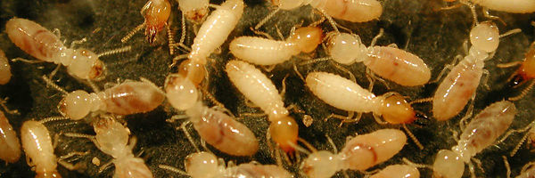 termite inspection near me
