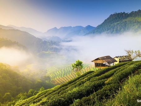 Chiang Mai acogerá el Campeonato Mundial inaugural de Montaña y Trail Running