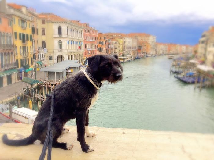 DOGe in Venice 🇮🇹