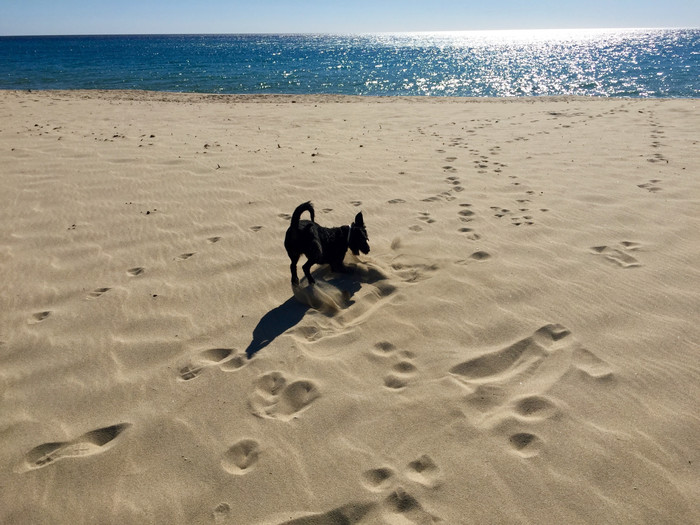 Setting my footprints in the sand of Sardegna ​
