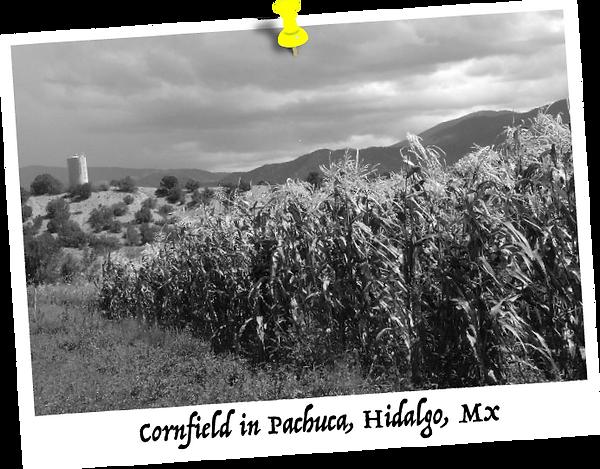 elotes-fanny-cornfield-in-pachuca-hidalgo-mexico.png