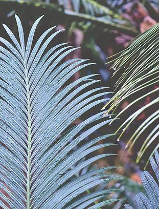 fern-fern-leaf-4090742_1920.jpg
