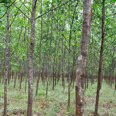 Plan Provincial Agroforestal