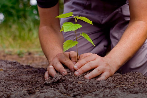 reforestacion-plantar-arbol-990x660.jpg