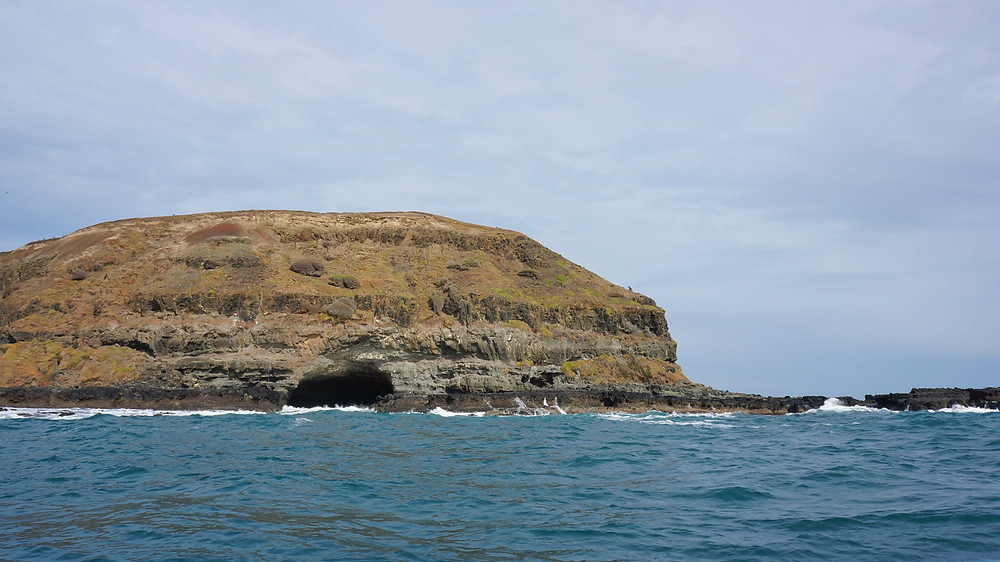 Looking at one of the seals' cave and home