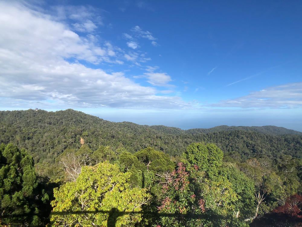 View from Curtis Crest Tree Top Walk: Nothing but rainforest