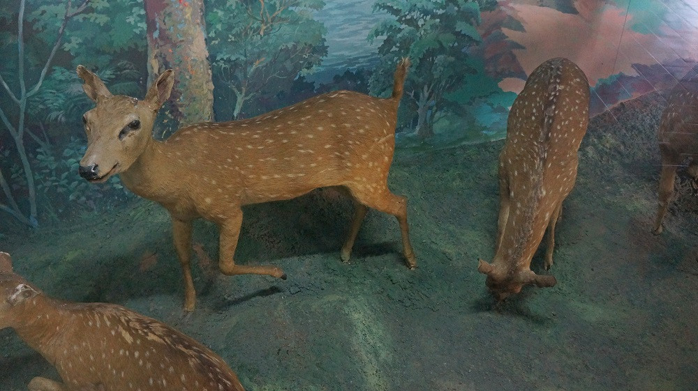 Introduction to the National Museum of Natural History