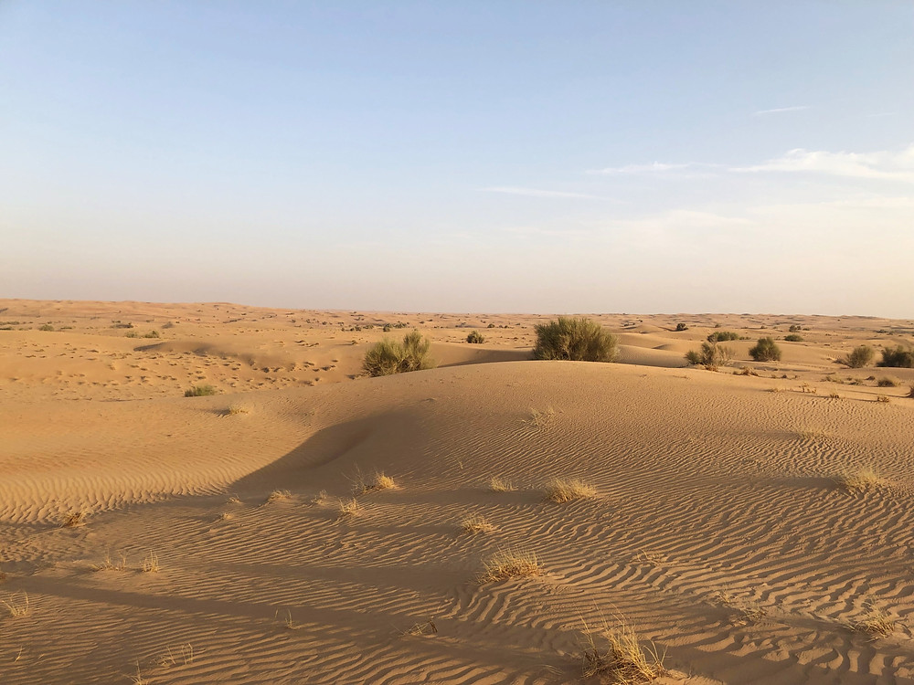 The view of the magnificent desert