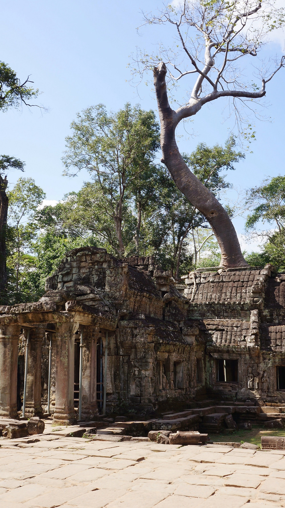Check out the ruins of Ta Prohm within Angkor Archaeological Park