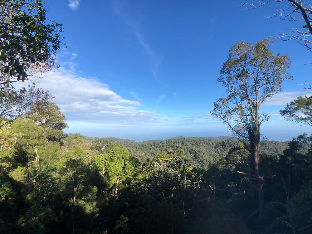 Look at the beautiful rainforest when walking along the Canopy Walk at The Habitat